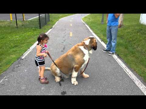 Cute little girl with her big dog