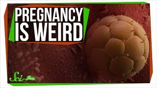 How Pregnancy Is Like Growing an Alien Inside You