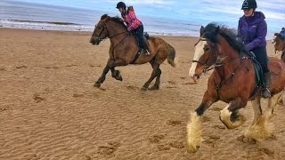 Cumbrian Heavy Horses Beach Ride HD Drone and GoPro