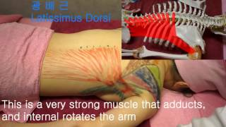 Korean massage, Part 3-1 Shoulder muscle