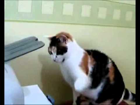 Les chats en folie