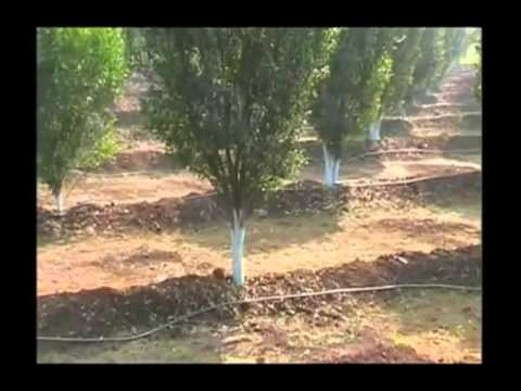 सोयाबीन की इस तरह खेती करने से किसान होंगे मालामाल