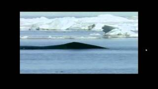 Discovery Channel Blue Whale