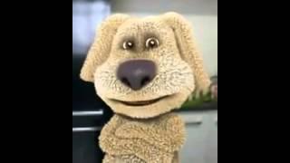 Cachorro engraçado   Videos curtos para Whatsapp