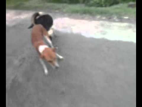 wasim akram beldanga New dog sex.3gp
