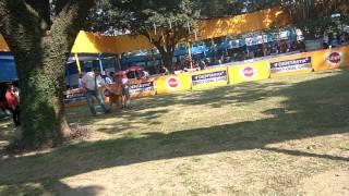 Ckc show 164th & 165th champion dog South Africa boer boel