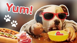 Hungry Like the Dogs: Funniest Feasting Dog Videos, Clips & Compilation