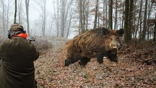 Hunting for wild boar. great moments. selection videos of real hunt