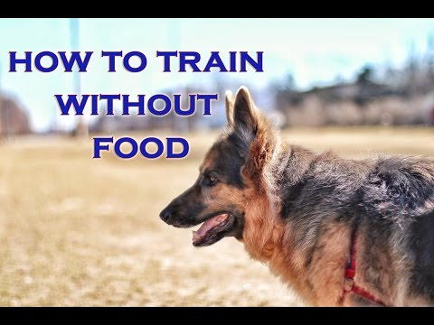 How To Train Your Dog To Listen WITHOUT FOOD!