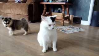 Storm & Shadow meet Finn, an extremely patient cat.