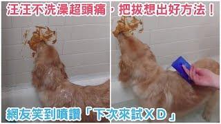 汪汪不愛洗澡超頭痛,還好把拔想出這個超棒的好方法!網友笑到噴讚「下次來試XD」