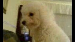 snog dog (MOV00690.3GP)