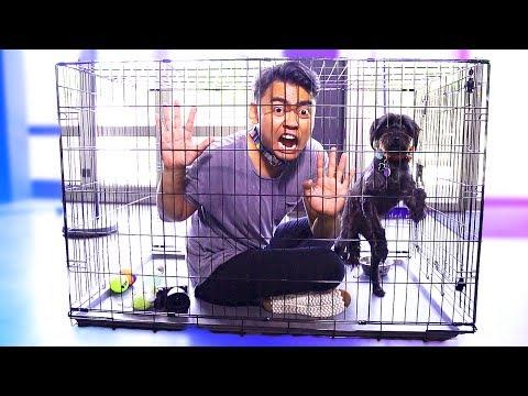 Xxx Mp4 Escape The Dog Cage Challenge 3gp Sex