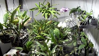 How to set up an orchid grow room