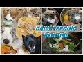 DAILY FEEDING ROUTINE FOR 30+ PETS! (FEEDING MY ANIMALS!)