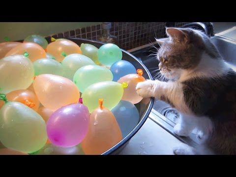 Xxx Mp4 Cats VS Balloons 😂🎈 Funny Cats Playing With Balloons Funny Pets 3gp Sex
