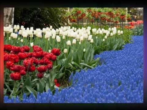 Wiosna w zaczarowanym ogrodzie