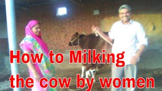 How to Milking the cow by women.