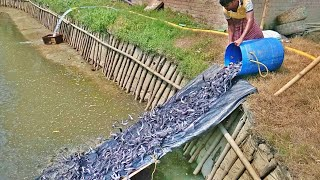 Ponds  Structure for Catfish Hatchery || Travel tride