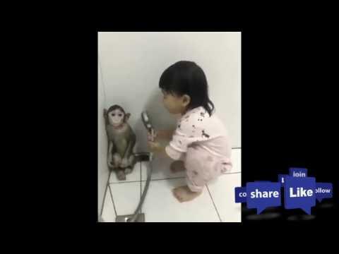 Monyet lucu Ini akrab banget ama majikanya