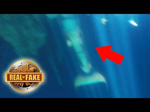 MERMAID CAUGHT ON TAPE MEXICO real or fake