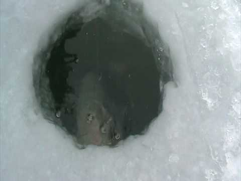 Unreel Crazy ice fishing Must see Wisconsin Fishing