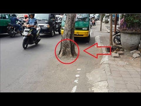 Ngeri ! Pohon Ajaib Di Tengah Jalan Raya