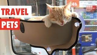 Travel Pets | Funny Pet Videos Compilation 2017