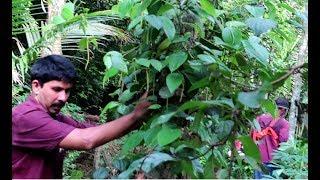മഴക്കാലത്ത് കൃഷിയിടം എങ്ങനെ പരിപാലിക്കാം Krishi Lokam