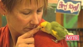 Training Small Parrots