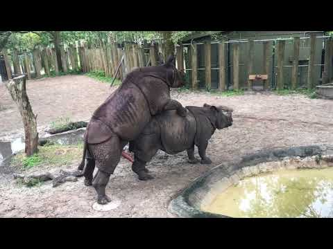 Rhinos at Tampa's Lowry Park Zoo 05.10.17