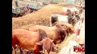 Song Of Biplob Qurbani Qurbani Dhaka,Bangladesh   YouTube