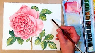 LIVE! English Roses in Watercolor Tutorial 12:30pm ET