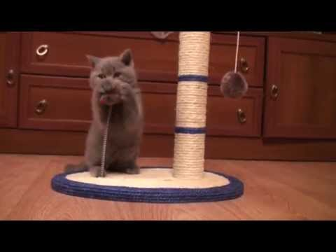 Когтедралка для кошек своими руками фото