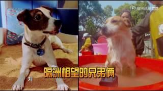 鹿晗关关为狗狗洗澡,画面超暖超有爱!