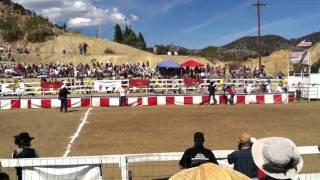Emu Race Virginia City Sept. 8, 2012