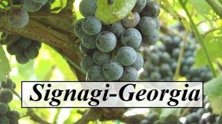 Georgia/Signagi (Beautiful Nature,Vineyard) Part 9
