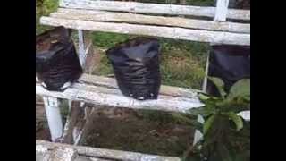 Rak Kayu dan Rak Bambu untuk menanam Sayuran