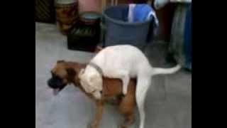 perras arrechas
