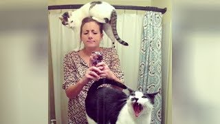 THIS IS SO FUNNY it will KILL YOU! Get ready to LAUGH! - Super FUNNY ANIMAL videos