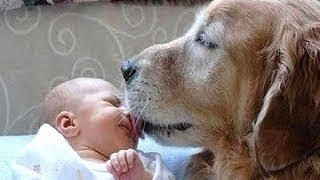 Hunde treffen Neugeborenen ersten Mal [HD Video]