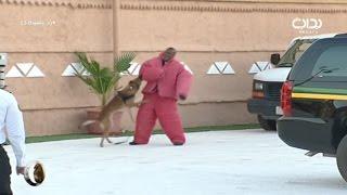 عرض الوسائل الحية الكلاب البوليسية - أ. عبدالله السلوم   #زد_رصيدك53