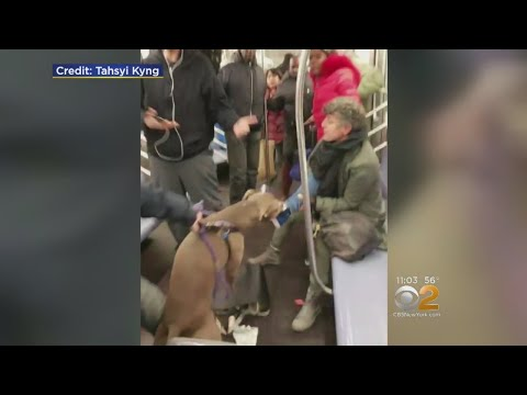 Xxx Mp4 Dog Attacks Woman On Subway 3gp Sex