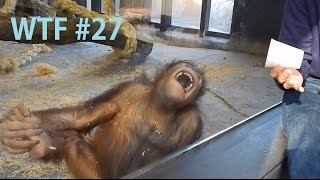 Monkey Sees A Magic Trick - WTF #27