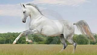 Uma musica de cavalos para nao fica esquesido