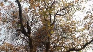 Natural beauty of Ramna Park Dhaka Bangladesh