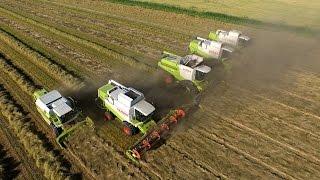 Grass Seed Harvest   Graszaad oogst 2015   Veerman Goudswaard