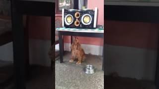 Dog Rafi Feat Miso Kovac : Poljubi Zemlju