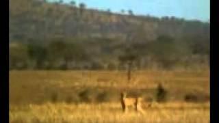 Um dia da caça outro do caçador.3gp