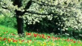 নবী জির এতো সুন্দর একটা গজল সুনে মনে হলো আবার নতুন জিবণ ফিরে পেলাম
